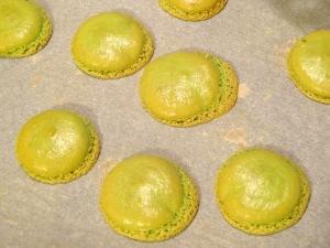Macaron poire praliné coque cuite